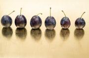 wild plums © Marek Kosmal | Dreamstime.com