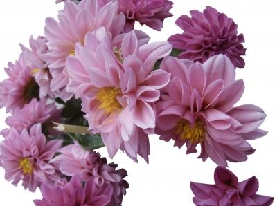 pink flowersby