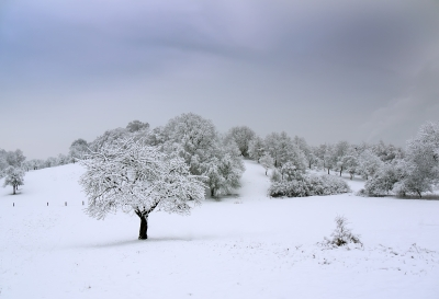 Winter scene by dan /free digital images