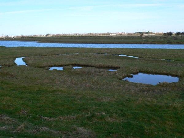 Salt Marsh Pools by Eirian Evans