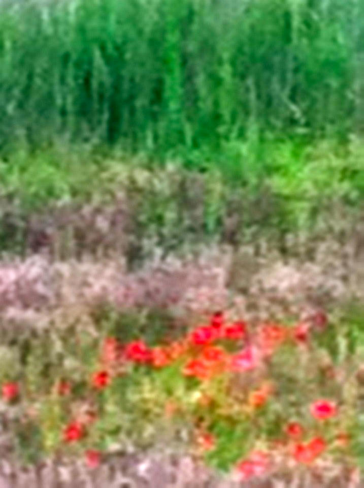 blurred close up of vinyard meadow