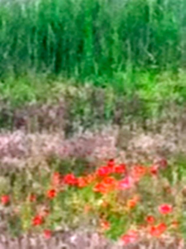blurred close up of vinyard meadow