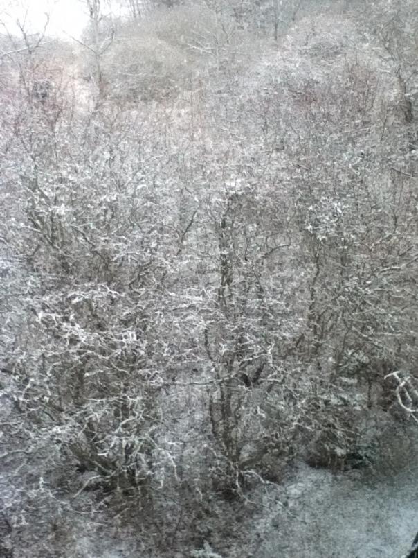Indira Ganesan, More of Last Year's Snow, 2012