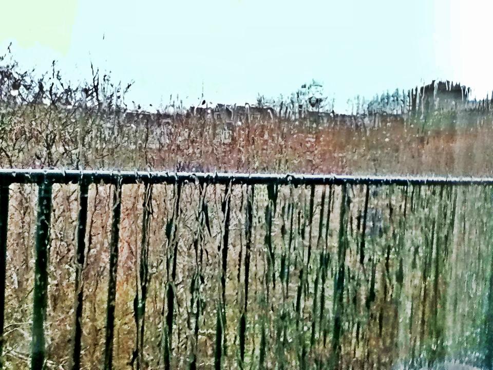 Indira Ganesan, Tremendous Rain, 2013