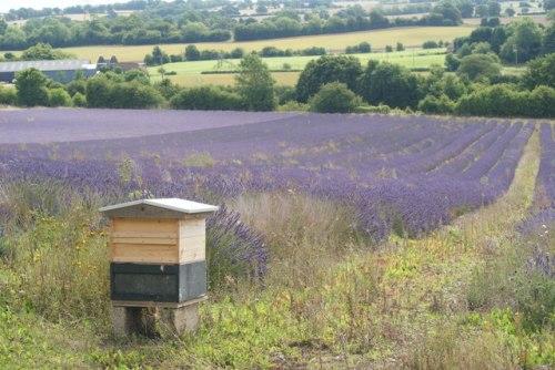 Beehive,_Alton,_Hampshire_-_geograph.org.uk_-_1417197