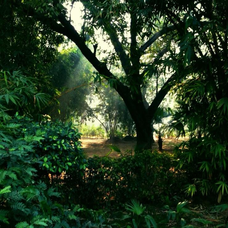Indira Ganesan, Lodhi Gardens, 2014