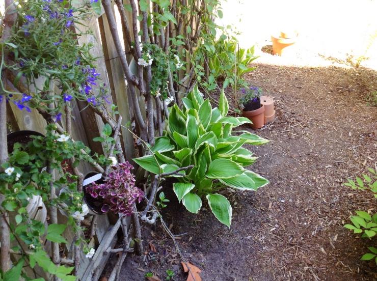 Indira Ganesan, garden fence, 2014
