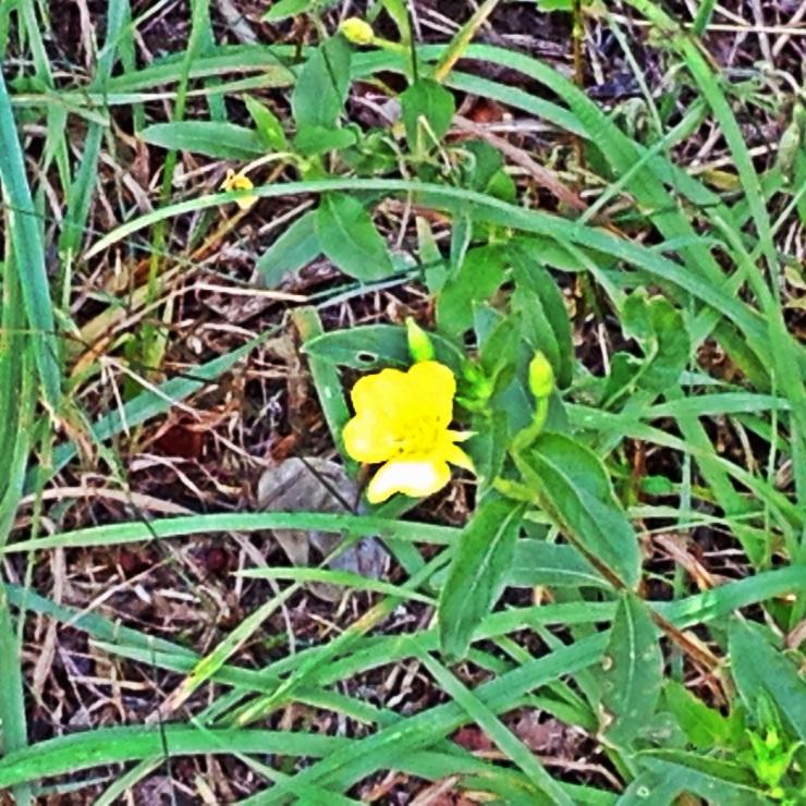 Indira Ganesan, Bright Yellow Flower, 2014