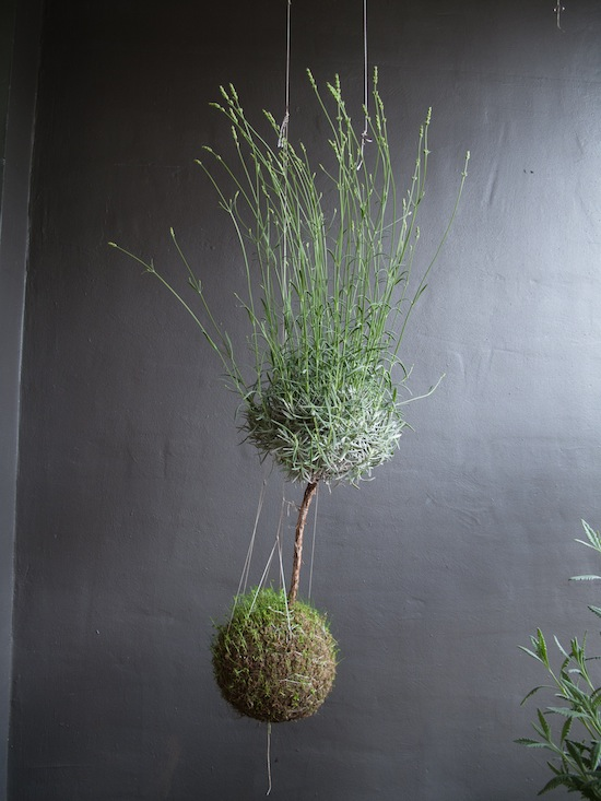 http://www.popsugar.com/home/photo-gallery/17858974/image/17858992/PS-Whats-most-challenging-part-about-creating-string-garden