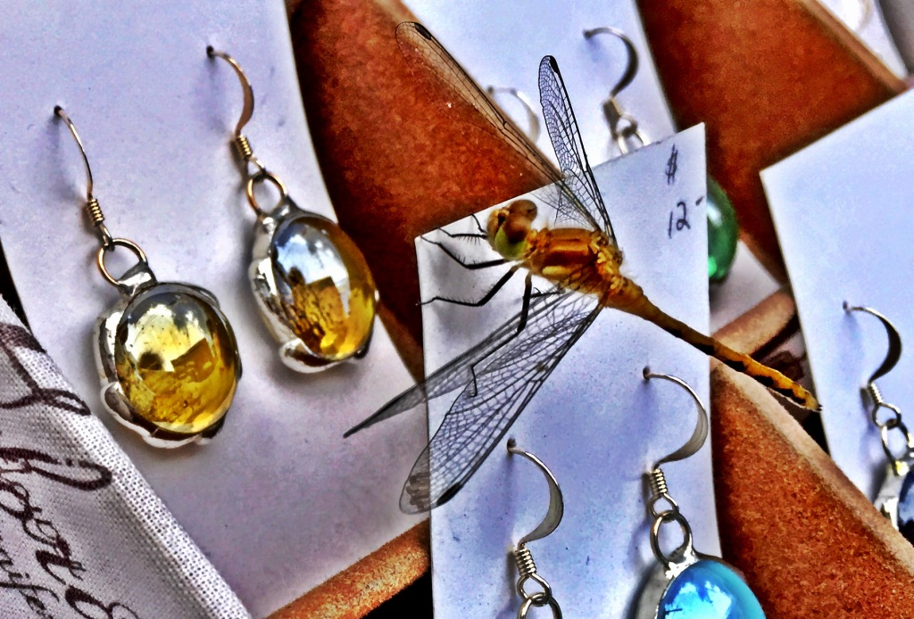 Dragonfly shopping for earrings