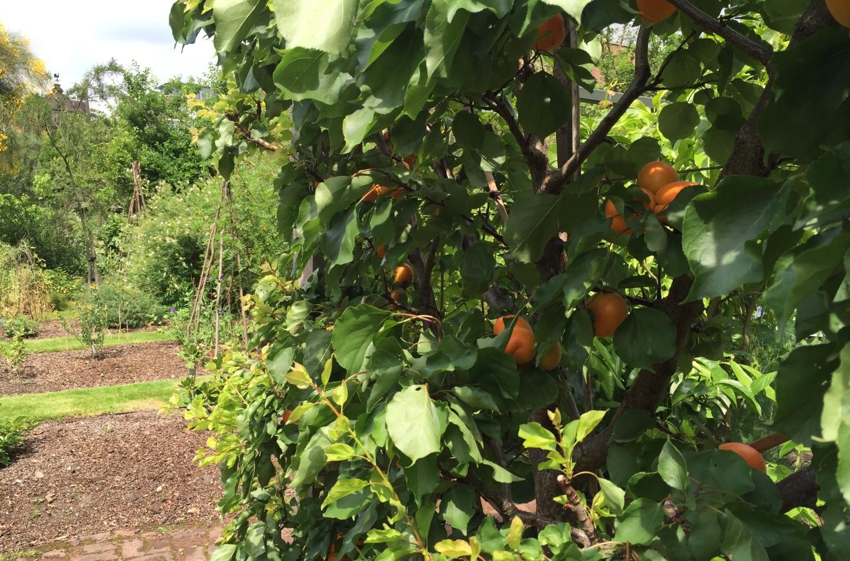 C.P. G: fruit
